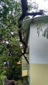 Galhos atingiram o telhado
